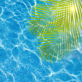 Cool pool water with palm tree Royalty Free Stock Photo