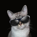 Cool white cat with party sunglasses on black a is wearing a background lights around the feline Royalty Free Stock Images