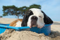 Cooling down for dog Royalty Free Stock Photo