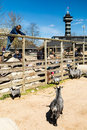 Copenhagen zoological garden denmark april the popular danish tourist attraction the welcomes visitors on a sunny day Stock Image