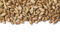 Copyspace sunflower seeds composition Royalty Free Stock Photo