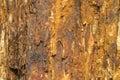 A cor e a textura de madeira fósseis como o ferro oxidam Imagem de Stock Royalty Free