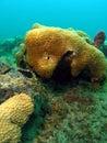 Coral Stock Photos
