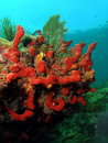 Coral Stock Images
