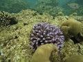 The coral in Andaman ocean