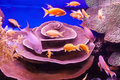 Coral aquarium reef with fish Royalty Free Stock Images