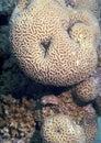 Coral closeup Stock Images