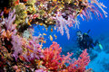 Coral diver Royalty Free Stock Photography