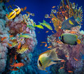 Coral and fish in the red sea egypt Stock Photo