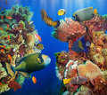 Coral and fish in the red sea egypt Royalty Free Stock Image