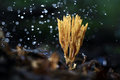 Coral Fungus Strange Space Obj...