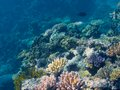 Coral in the Great Barrier Reef in Australia Royalty Free Stock Photo
