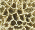 Coral macro photo of a rock Royalty Free Stock Photos
