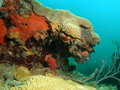 Coral Mound Royalty Free Stock Photography