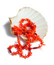 Coral necklace over sea shell Royalty Free Stock Photo