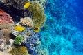 Coral no Sea.Masked vermelho e na borboleta diagonal Foto de Stock Royalty Free