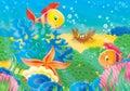 Korál útes