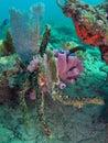 Coral reef Στοκ εικόνα με δικαίωμα ελεύθερης χρήσης