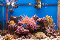 Coral reef in aquarium Royalty Free Stock Photo