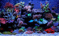 Coral reef aquarium scene Royalty Free Stock Photo