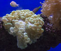 Coral Reef aquarium view Royalty Free Stock Photo