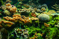 Coral reef a colorful with many different types of corals Stock Images