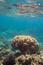 Coral reef colorida en la isla de lipe en tailandia Fotos de archivo