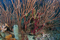 Coral Reef Composition. Royalty Free Stock Photo