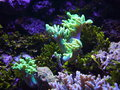 Reef detail soft coral Royalty Free Stock Photo