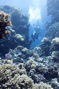 Coral reef with divers in tropical sea, underwater Royalty Free Stock Photo
