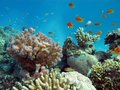 Coral reef with exotic fishes Stock Photo