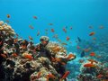 Coral reef with exotic fishes Stock Image