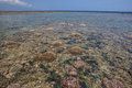 Coral reef exposed at low tide a shallow is during a severe near the tropical island of flores indonesia this diverse region is Stock Photos