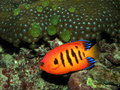 Coral reef and fish red green Stock Image
