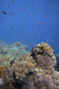 Coral reef with fishes Stock Photography
