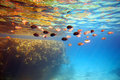 Coral reef and fishes. Royalty Free Stock Photography