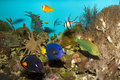 Coral Reef Fishes in Aquarium Royalty Free Stock Image