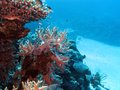 Coral reef with hard corals at the bottom of tropical sea red in egypt Stock Photos