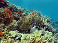 Coral reef with hard corals end exotic fishes at the bottom of tropical sea Royalty Free Stock Photo