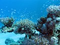 Coral reef with hard corals and exotic fishes at the bottom of tropical sea Stock Photos