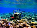 Coral reef a healthy in laamu island maldives Royalty Free Stock Images