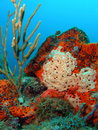 Coral reef this images was taken right off the beach in pompano beach florida in about feet of water Stock Photography