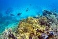 Coral reef med skolan av fisken Royaltyfria Bilder