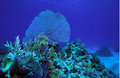 Coral reef near Cayo Largo, Cuba Stock Image