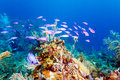 Coral reef near cayo largo cuba Royalty Free Stock Photo