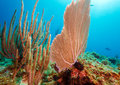 Coral reef near cayo largo cuba Stock Images