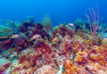 Coral reef near cayo largo cuba Royalty Free Stock Image