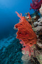 Coral reef in the Red Sea. Royalty Free Stock Photo