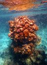 Coral reef in Red sea Stock Photo