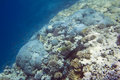Coral reef in red sea underwater life of egypt saltwater fishes and colorful Stock Images